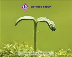 Brochure Việt Phúc