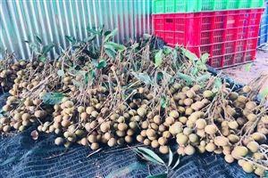 Không được sử dụng lưu huỳnh để xử lý trái cây tươi xuất đi Mỹ