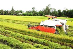 Sau EVFTA, gạo vào EU có giá hơn 1.000 đô la/tấn