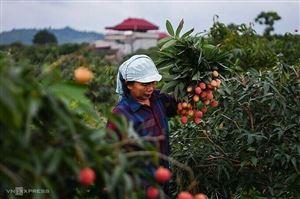 Gỡ nút thắt cho nông nghiệp để tận dụng cơ hội từ EVFTA