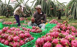 Chuyện hiếm, trái cây Việt ngược dòng xuất mạnh sang Thái Lan