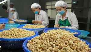 Xuất khẩu nông sản đạt 37,4 tỷ USD: Lâm sản và lúa gạo cứu cả ngành nông nghiệp